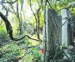 栖霞山意外发现5块古碑 明代高僧传奇风采重现