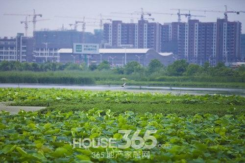 [原创]熙龙湾|大阳垾湿地公园 享优质生态住区