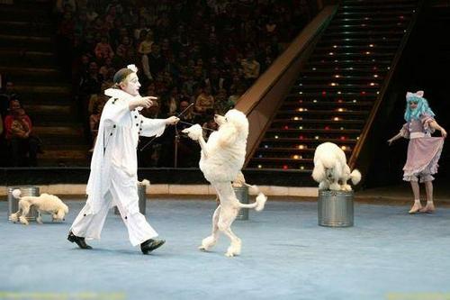 马戏团表演吓哭孩子 芜湖市民呼吁请别虐待动物