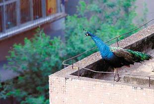 被玩坏的楼顶!有人搭违建压坏高楼 有人建动物园养异型宠物
