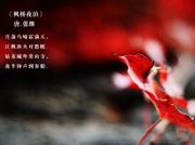 《姑苏底片》第五期:枫